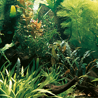 Obrázek pro kategorii hnojiva na rostliny